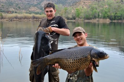 PHOTO 4 - A mint Ebro common and catfish 2