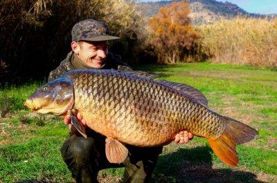 50-carp