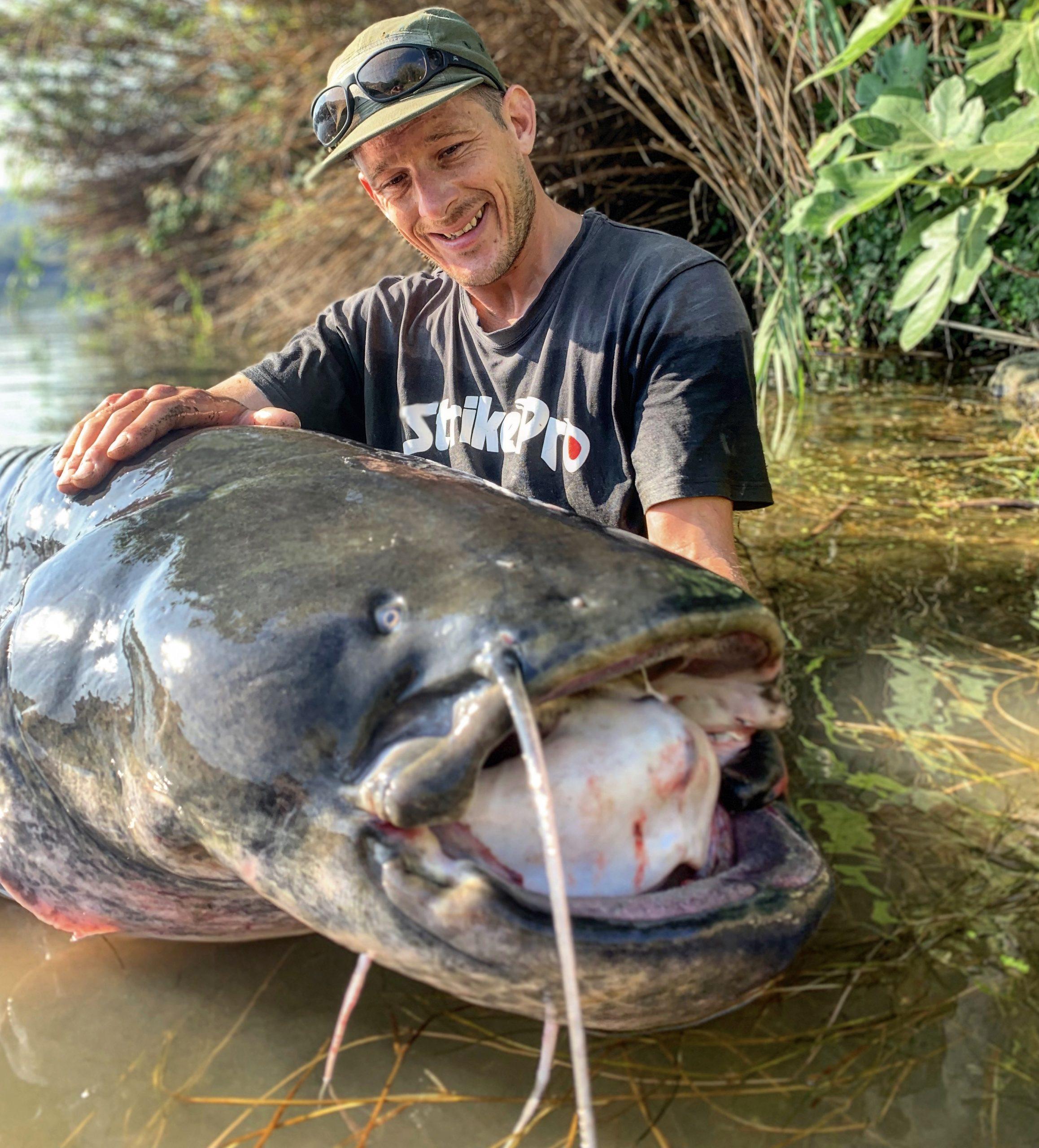 large ebro catfish at ebromadcats